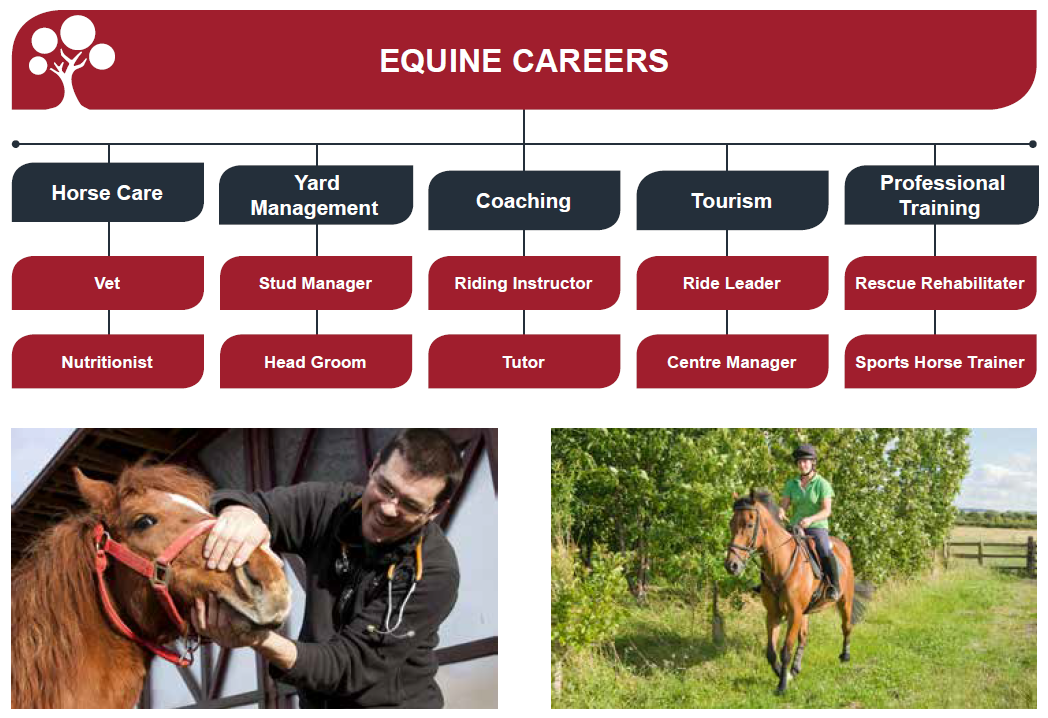 S:\Regions and Nations\Scotland\MARKETING\Careers promo material\Careers brochures\Lantra Scotland careers brochures\Individual brochure folders\Equine\jobs in equine industry.png