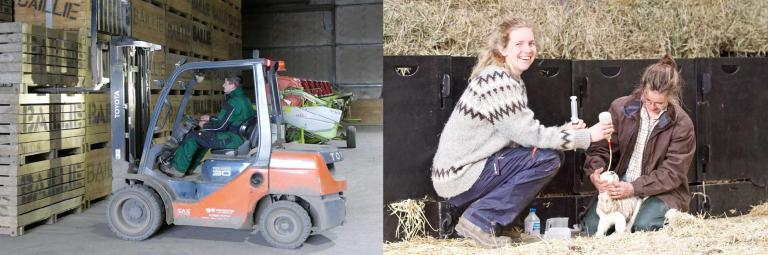 Forklift driver and lambers on Scottish farms